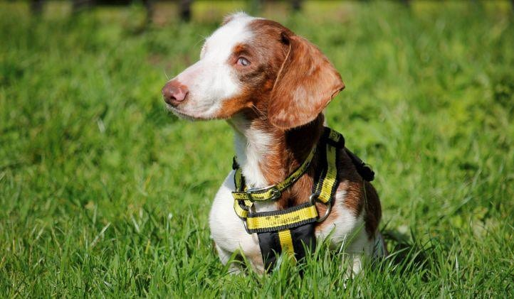 Dixie, photo by Dogs Trust