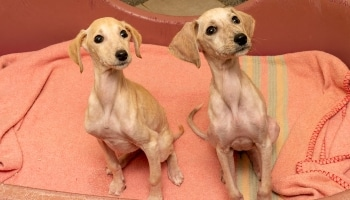 Holly and Ivy, RSPCA