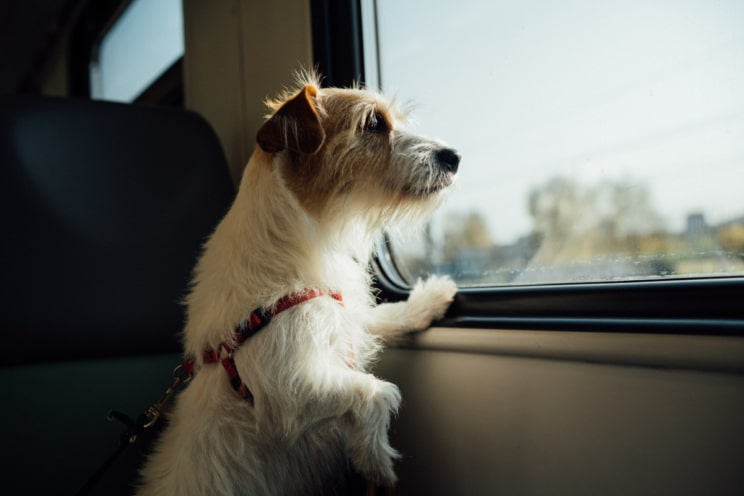 Brexit and travelling with your dog in the EU