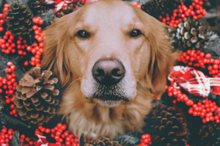 How to keep your dog healthy and happy at Christmas