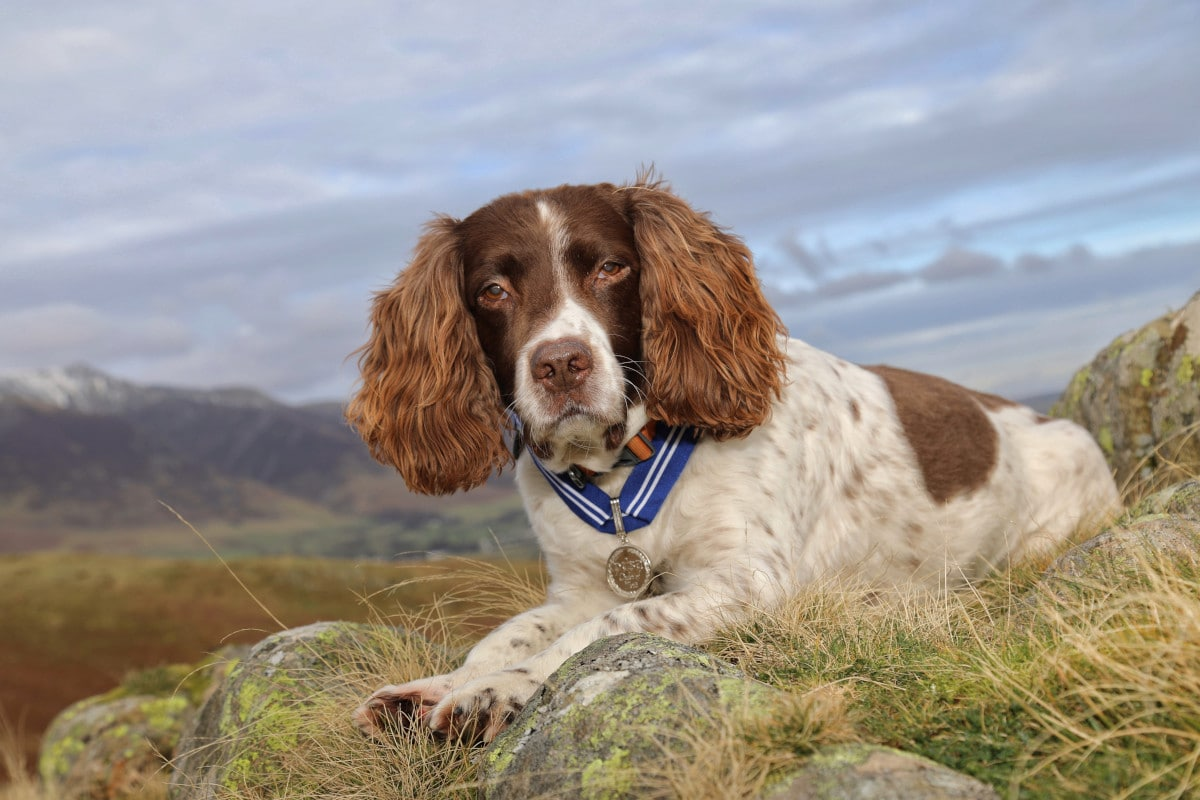 Thirteen-year-old Max has been awarded the PDSA Order of Merit – the animals' OBE – by vet charity PDSA