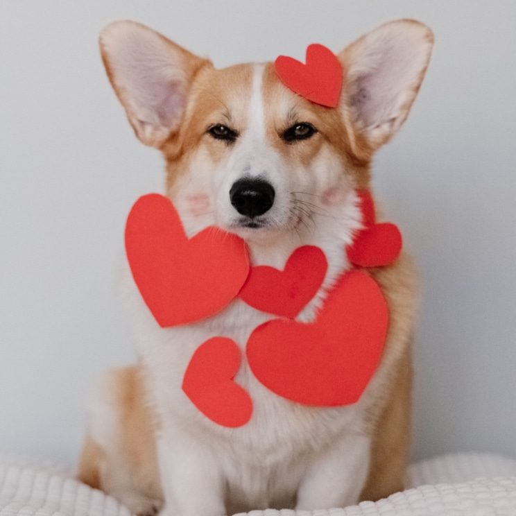 Join a Valentine's art class with Battersea's rescue dogs