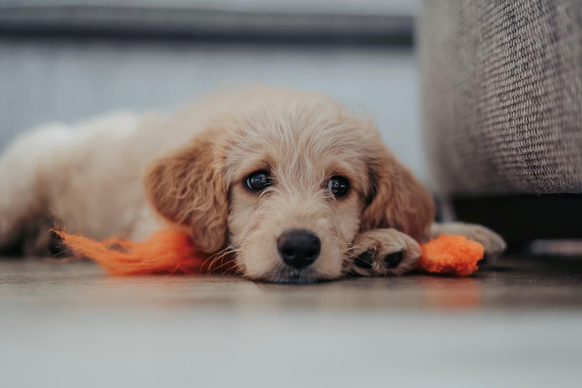 Bored puppy by Matthew Foulds on Unsplash