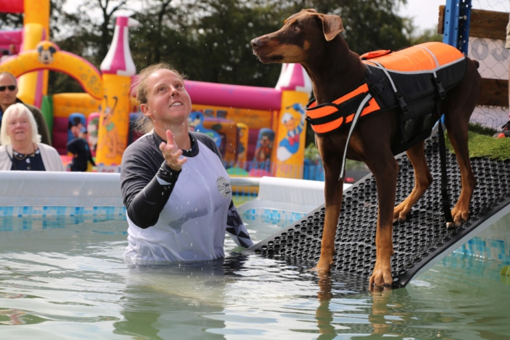 Woofstock UK, a festival for dogs and families