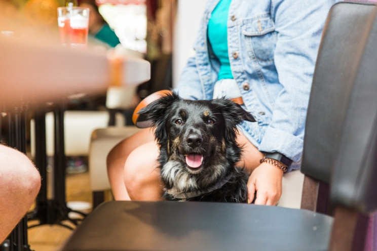 Find Dog Furiendly places to go with new app