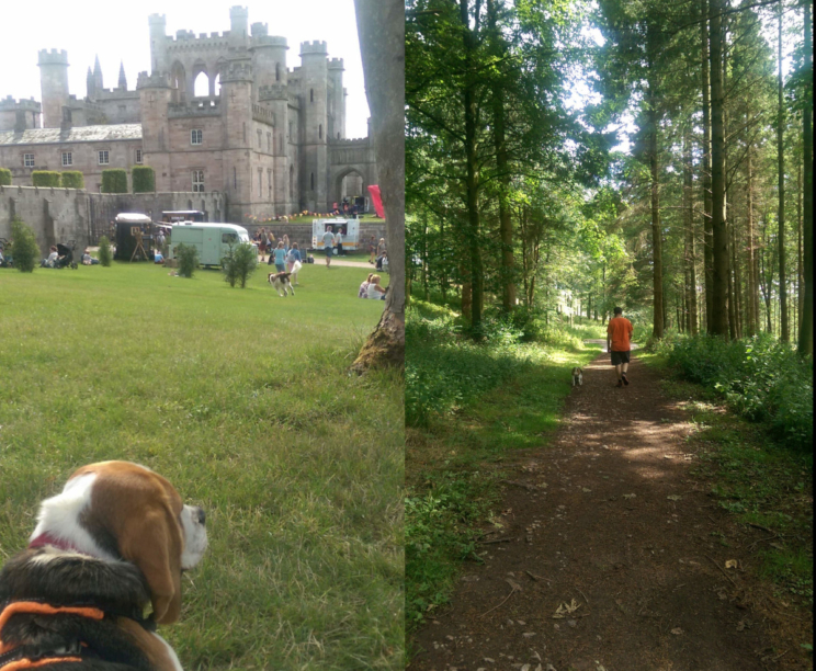 Good Doggy Guide at Lowther Castle in Cumbria