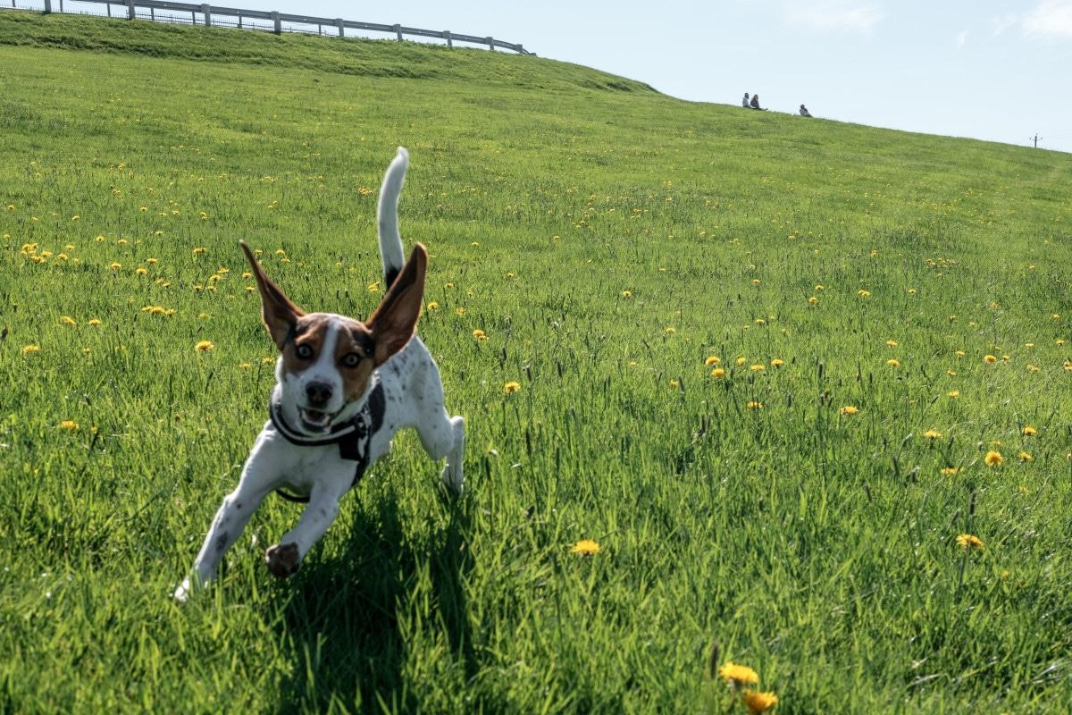 Dog running Photo by Tyler Farmer on Unsplash