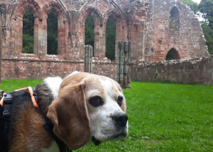 Visit Furness Abbey with your dog